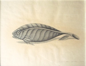 fish_leaf_1966_wb