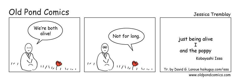live poppy