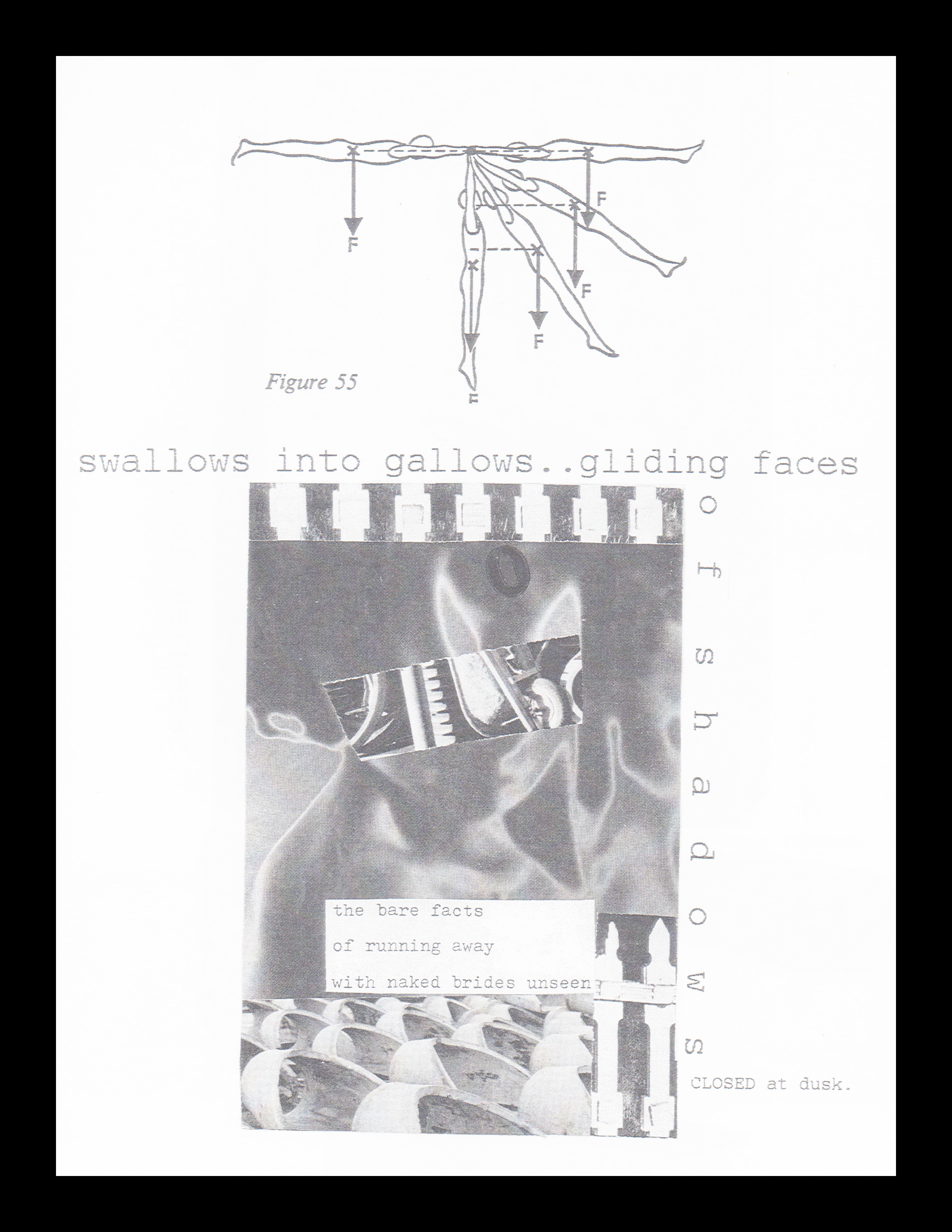 swallows into gallows