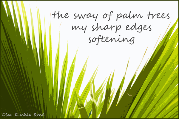 the sway of palm trees